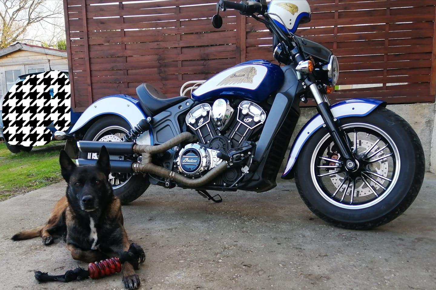 Photo d'Eric Indian Scout Bobber